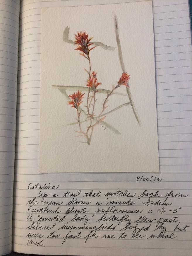 1991 Indian Paintbrush and journal