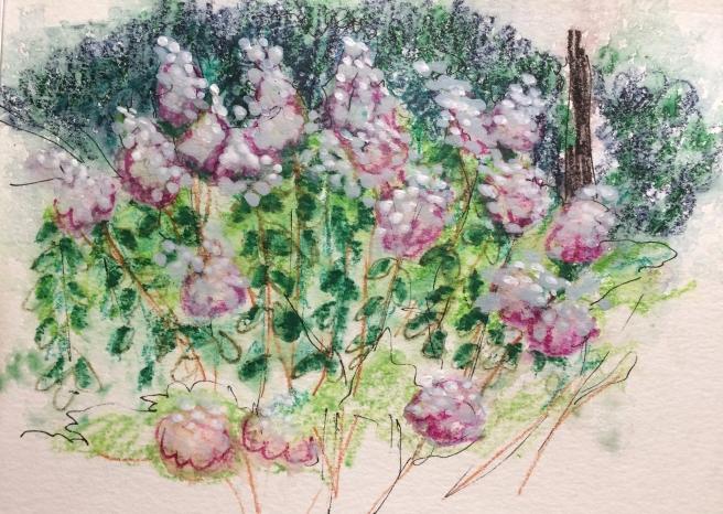Lilacs/Descanso Garden.jpg