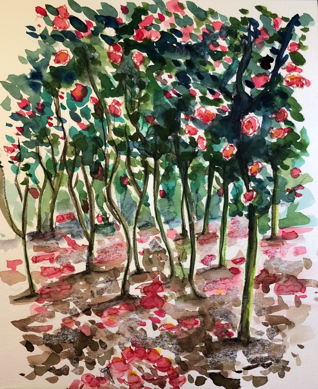 Camellia watercolor