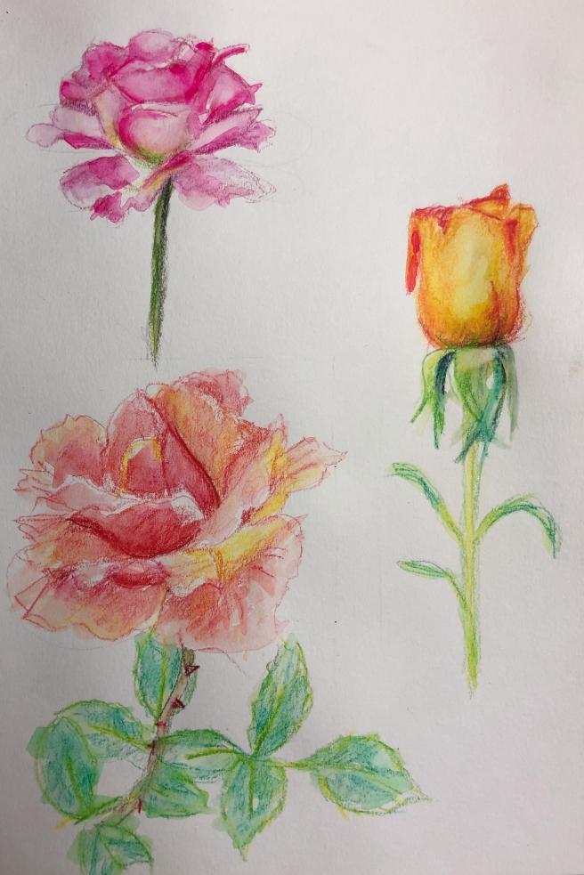 May birthday roses